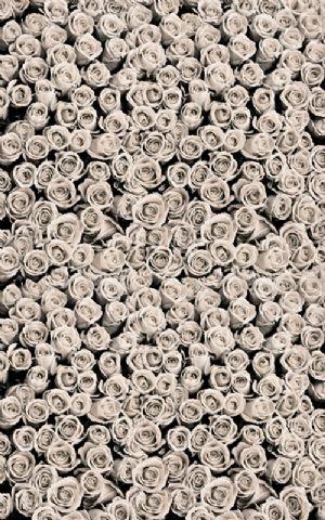 Click Props Hintergrund Vinyl mit Bild Roses White 1,52 x 2,44m Nr. CP-591322