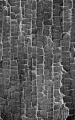 Click Props Hintergrund Vinyl mit Bild Black White Crackle 1,52 x 2,44m Nr. CP-590712